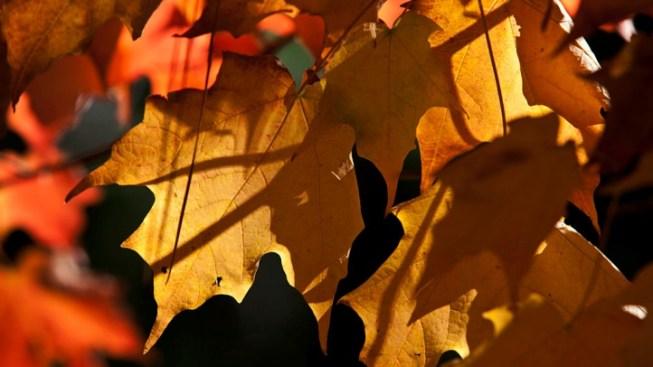 Autumn Adventurers, Find Fall Foliage Fun