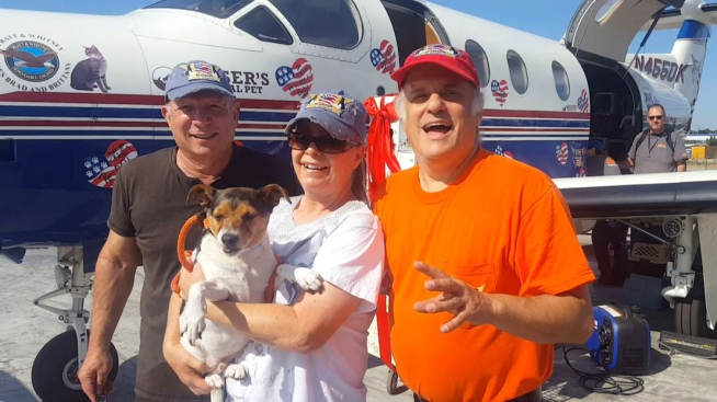 Shelter Dogs, Cats on 'Death Row' Flown to New Homes