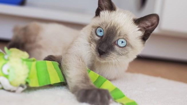 Adoption Specials: Best Friends Animal Society