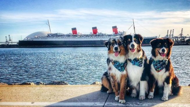 Doggie Paradise at the Queen Mary