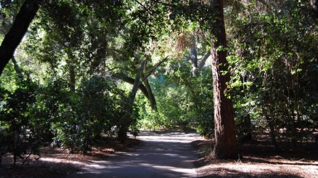 Peace: Weekend Walks at Descanso Gardens