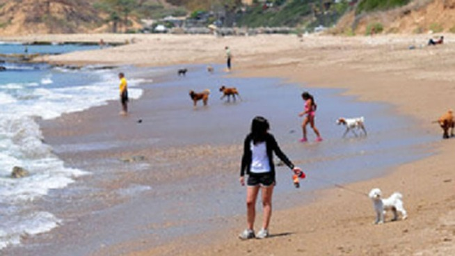 A popular Rancho Palos Verdes beach for dog owners and their pets was close to getting the city's support, but an upcoming vote may change that. NBC4's Annette Arreola reports.