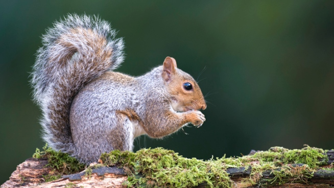 Plague-Infected Squirrel Found Near Campgrounds