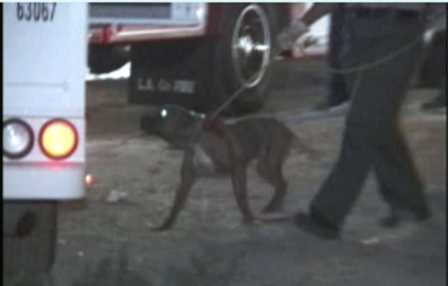 Twelve Arrested in Dogfighting Raid