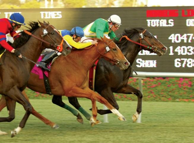 hollywood horse racing