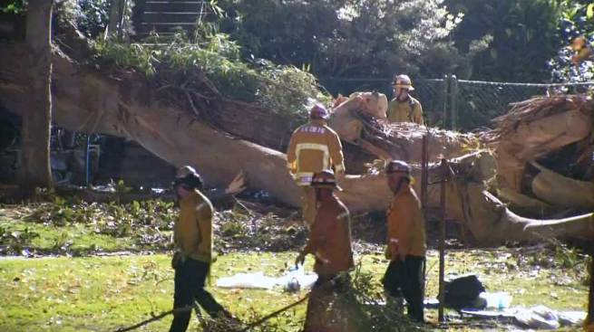 Judge Approves Family's Suit Against City Over Deadly Tree Fall in Whittier