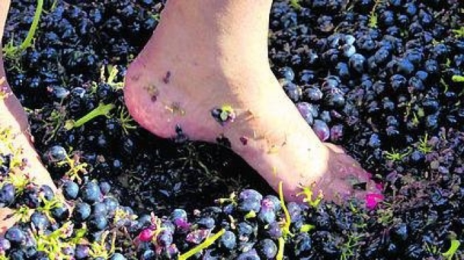 Julian's Annual Grape Stomp Party