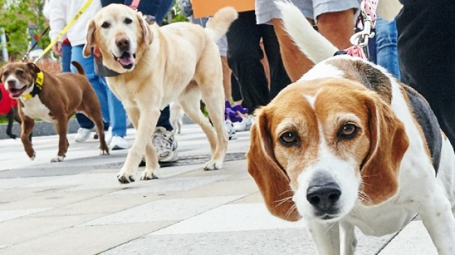 Leashes 'n Love: Strut Your Mutt LA