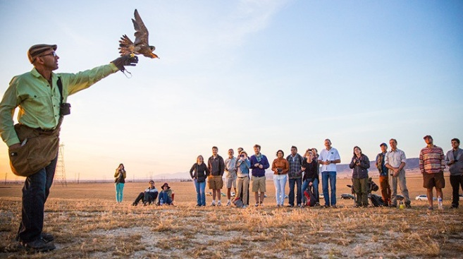 Falconry in Palmdale Flies on Obscura Day