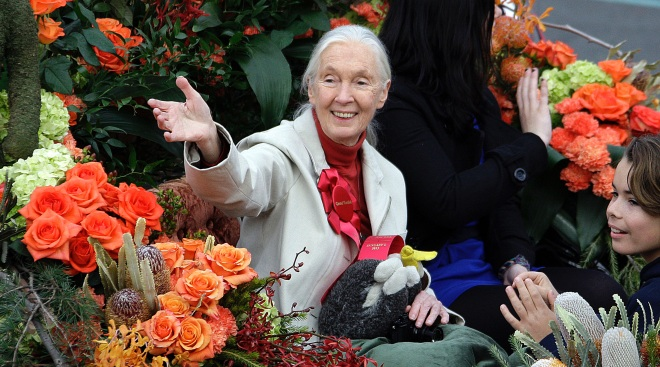 Jane Goodall Serves as Rose Parade Grand Marshal