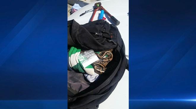 Man Arrested After Allegedly Carrying Methamphetamine, Python Snake in Backpack