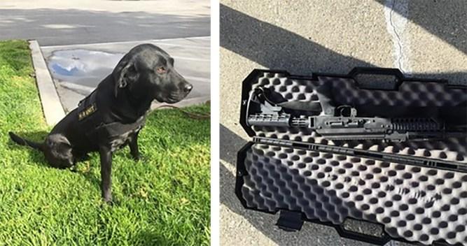 Good Dog Helps Catch Bad Guys Who Had Stash of Guns, Ammo