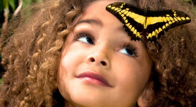 Butterfly Jungle: Wing Your Way to Safari Park
