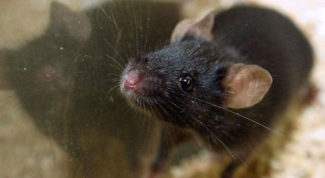 Mice Eat, Nest in Evidence Bags Filled with Pot: Cops