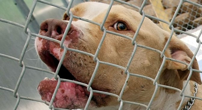"""Orange County's """"Vicious"""" Dogs May Be Put on Map"""