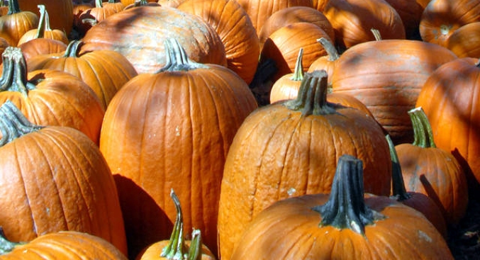 Weekend: Calabasas Pumpkin Festival