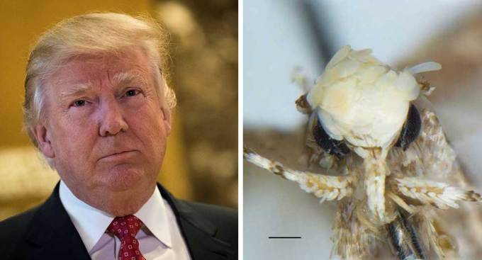 California Scientist Names Newly Discovered Moth Species After Donald Trump