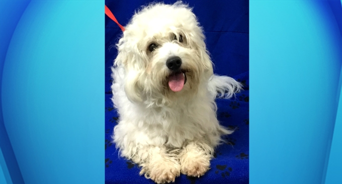 Pet of the Week: Tyson