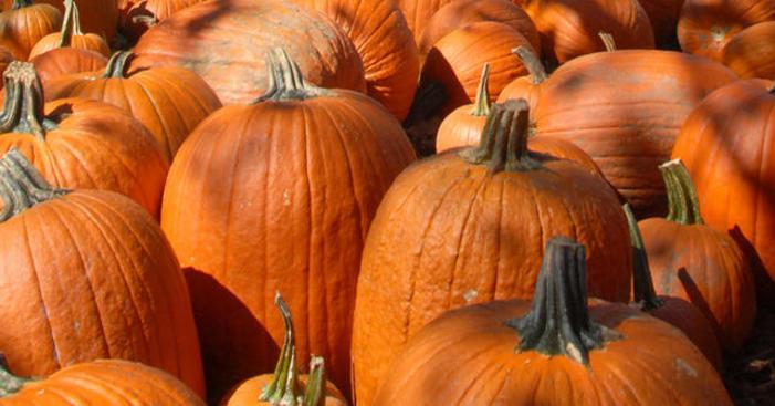 Join South Coast Botanic Garden's Great Pumpkin Hunt