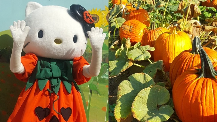 Hello Kitty to Pop by Tanaka Farms One Last Time