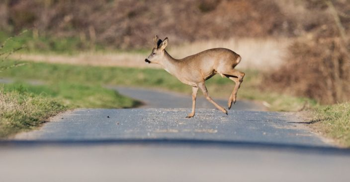 'Are You Going to Eat That?' Road Kill Now Legal to Eat in California