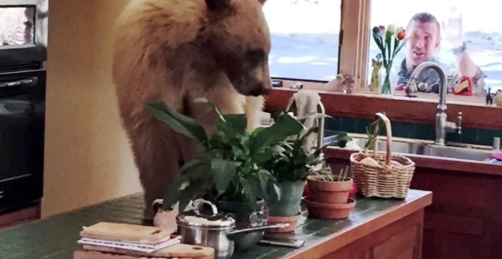 Hungry Bear Caught Breaking Into Lake Tahoe Kitchen