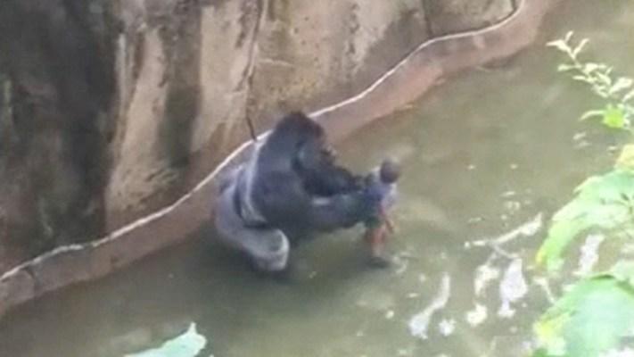 Full Video: Gorilla Grabs Boy at Zoo