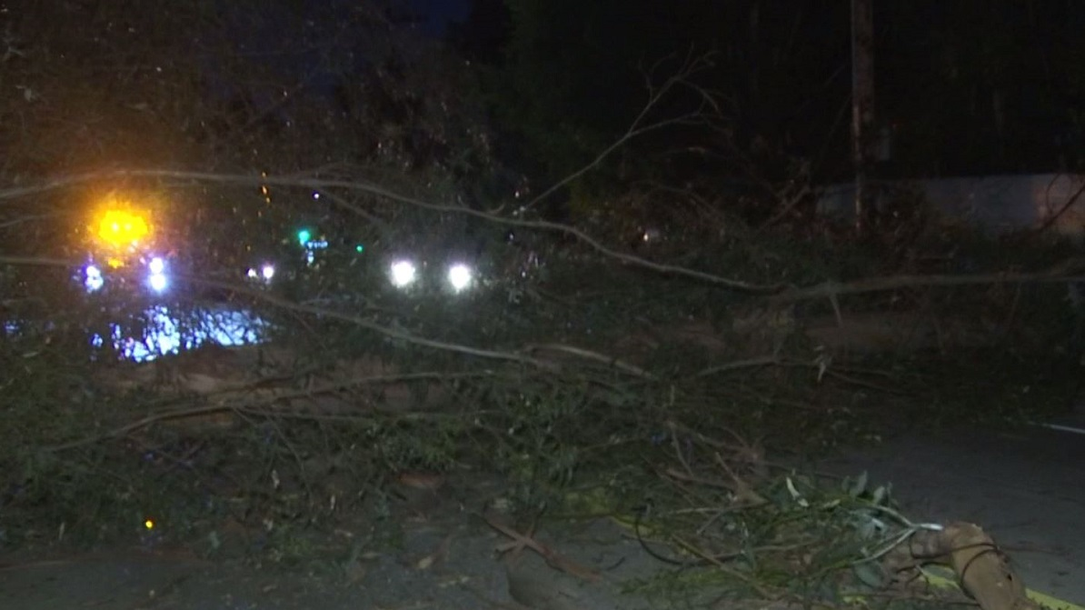 A tree falls onto power lines on Laurel Canyon Boulevard, knocking down power for nearly 300 residents in the Hollywood Hills on Christmas night.