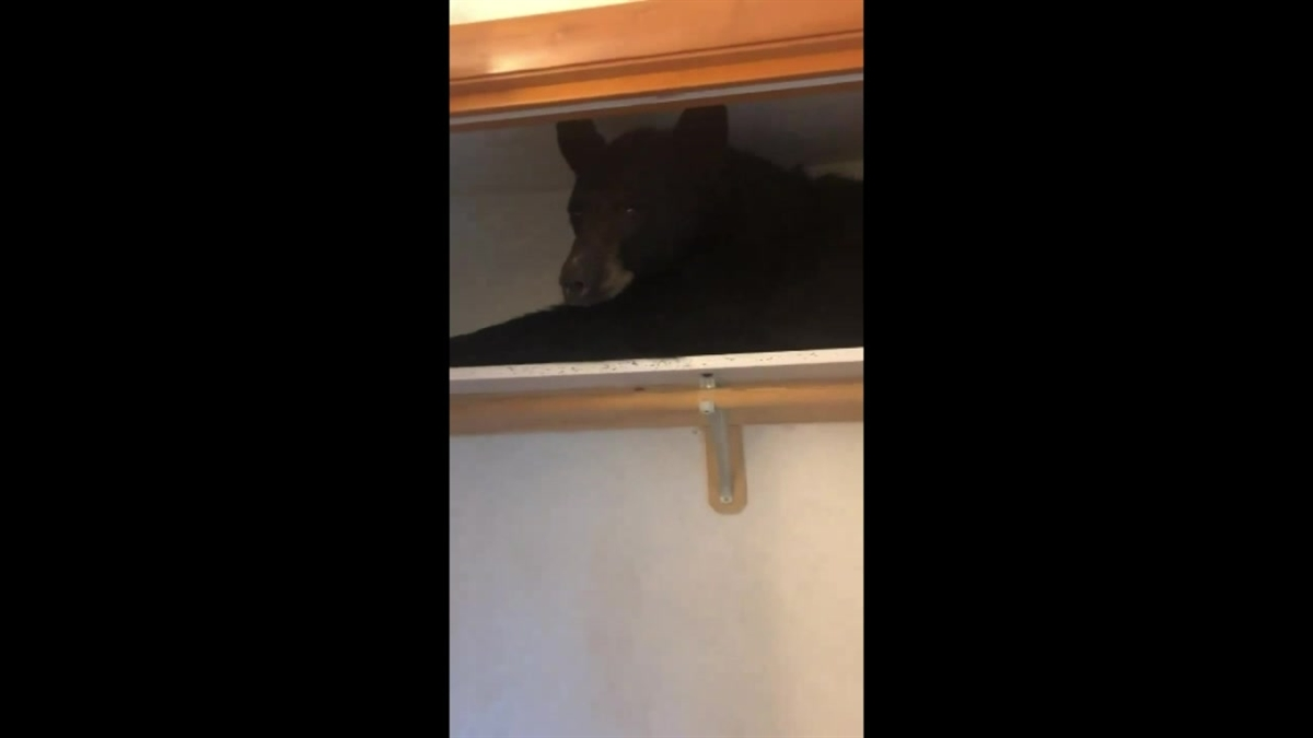 Black Bear Found Hiding Inside Closet in Montana Home