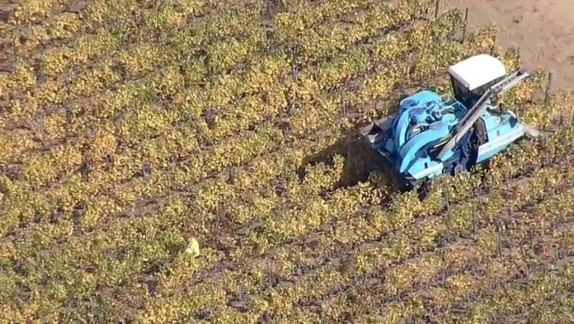Rescue crews are responding to reports of a person who fell into and is stuck in a grape picker in Napa County, according to Cal Fire.