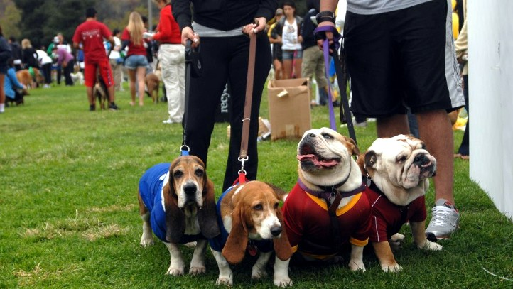 Dogs and humans'll stroll at the Sunday, Sept. 30 fundraiser at Brookside Park in Pasadena.