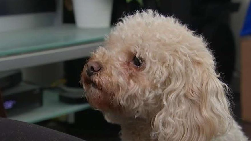 Woman Says Dog-Sitting App Sitter Lost Her Fur Baby
