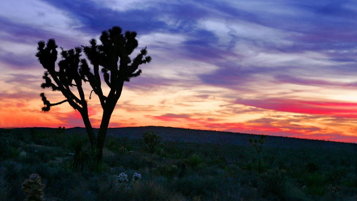 Eager to spend Sunday, Nov. 11 in some exquisite natural setting? Fee-charging parks within the National Park Service system will waive admission that day, to honor our veterans. (Photo by Carlo Allegri/Getty Images)