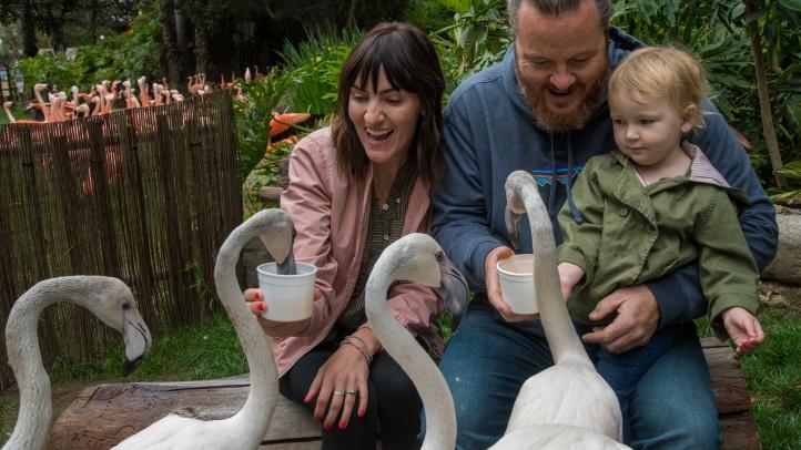 Mingle with Flamingos at LA Zoo's New To-Do