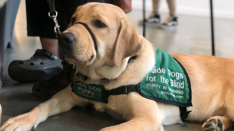 A guide dog retirement