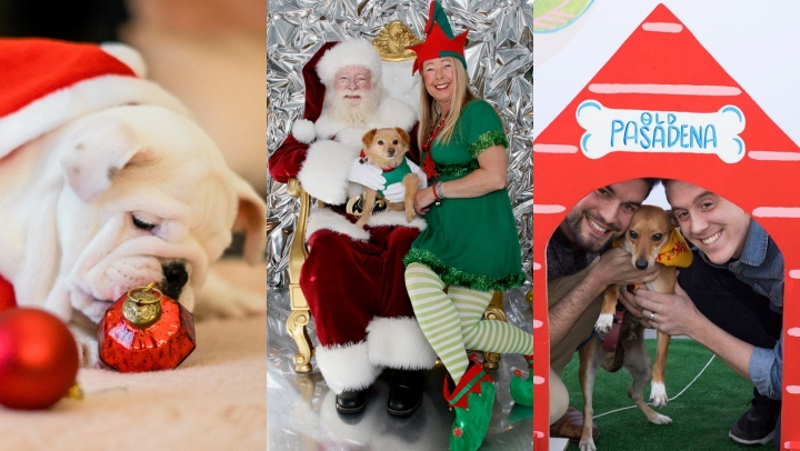 Who's a good dog? Santa knows. (Answer: All of them.) Find fun places to take Fido around SoCal this season.