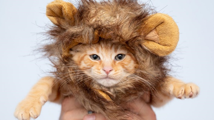 Adopt Your Own 'Lion King' at Best Friends