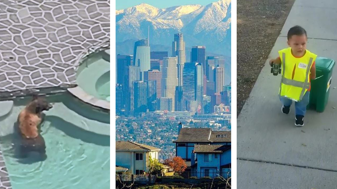 A bear taking a dip in a backyard pool, a beautiful view of downtown Los Angeles and a creative Halloween costume are some of NBCLA's most liked Instagram posts of 2018.