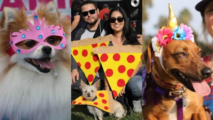 The awww-dorable Haute Dog Howl'oween Parade gave a happy bark on Sunday, Oct. 28 at Marina Vista Park in Long Beach.