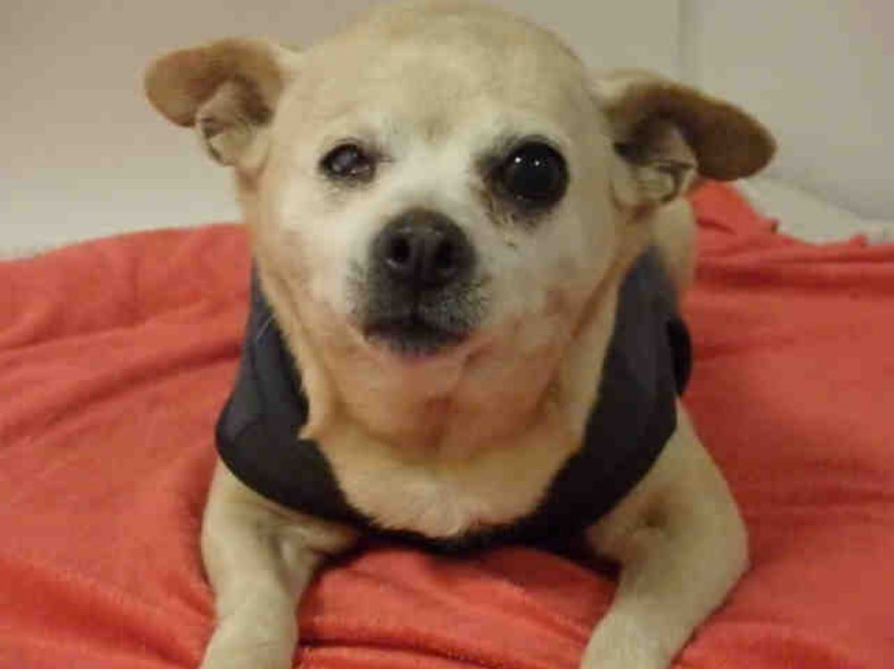 Shaily is the pet of the week for Thursday, Jan. 3, 2018.