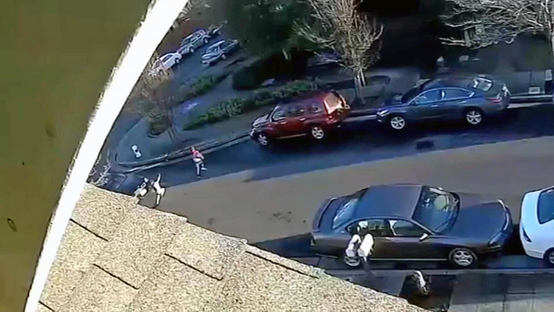 Police Search For Driver Who Hit Girl, 7, in Santa Rosa