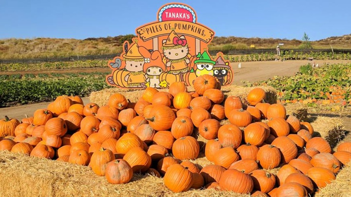 A Sanrio-fun pumpkin patch debuts at Tanaka Farms in Irvine on Sept. 22, 2018.